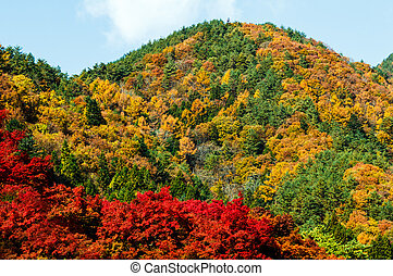 가을, 산