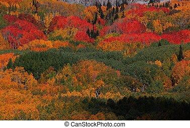 가을 색깔
