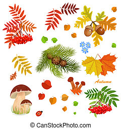 가을, 수집, 치고는, 너의, 디자인