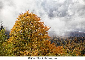 가을, 숲