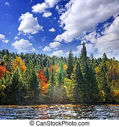 가을, 숲, 에서, 햇빛