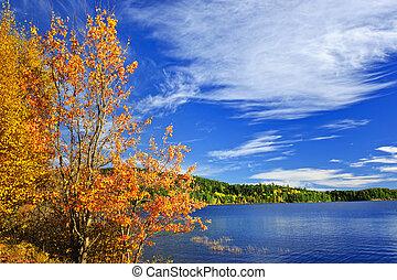 가을, 숲, 와..., 호수