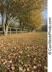 가을, 시골, 색