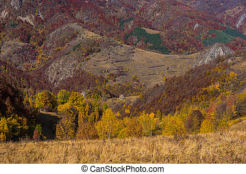 가을, 시골, 조경술을 써서 녹화하다