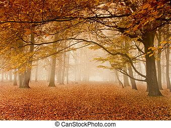 가을, 안개가 지욱한
