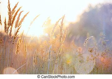 가을, 예술, 명란한, 배경, 자연