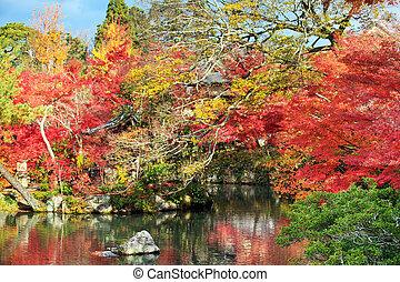 가을, 일본 정원, 와, 단풍나무