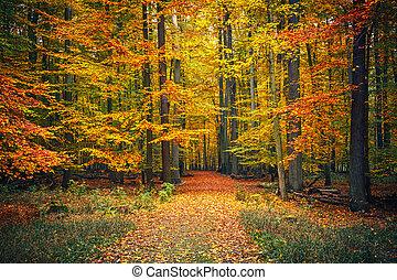 가을, 좁은 길, 공원