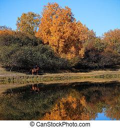 가을, 풍경, 에서, 호수