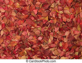 가을, pattern., barberry