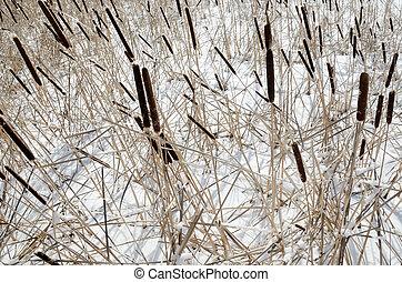 갈대, 호수, snow-covered, 겨울의 풍경