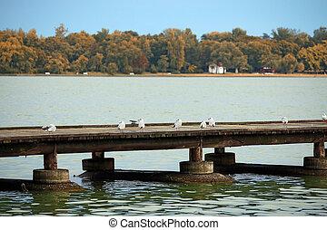 갈매기, 대, 통하고 있는, 그만큼, 교각, 호수, palic, subotica, 세르비아