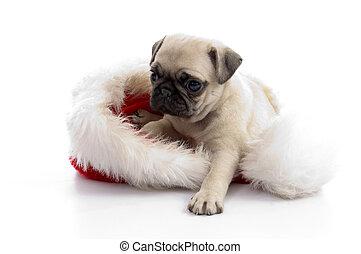 강아지, 모자, 크리스마스, 착석