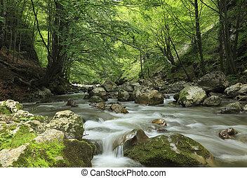 강, 에서, 그만큼, 숲