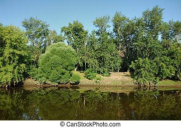 강, 와..., 조경술을 써서 녹화하다, 에서, 여름, 아침
