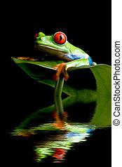 개구리, 통하고 있는, a, 잎, 고립된, 검정