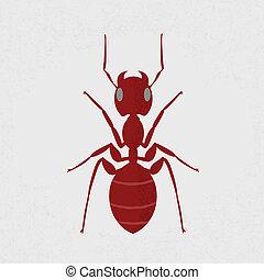개미, 빨강