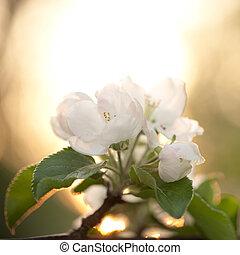 개화하는 것, 나무, 애플, 가지