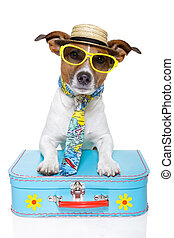 개, 관광객, 휴가
