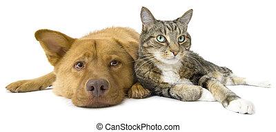 개, 와..., 고양이, 함께, 넓은 앵글 사람