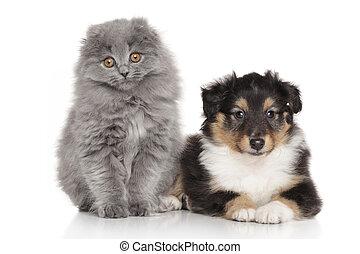 개, 와..., 고양이, 함께, 백색 위에서, 배경