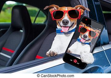 개, 창문, 차