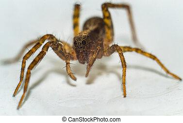 거미, 백색 위에서, 배경