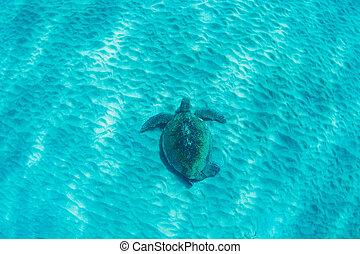 거북, 수중 사진, 녹색, 바다