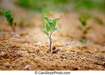 거의, 녹색의 식물