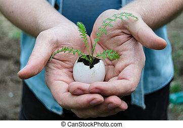 거의, 식물