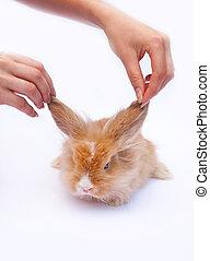 거의, 토끼, 손