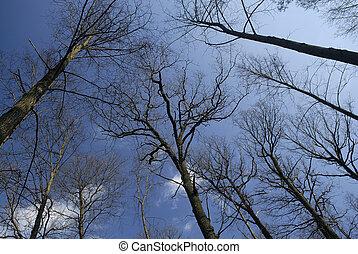 거인, 나무, 통하고 있는, a, 푸른 하늘