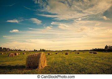 건초 곤포, 에서, 시골