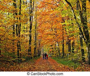 걷기, 에서, 가을, 공원