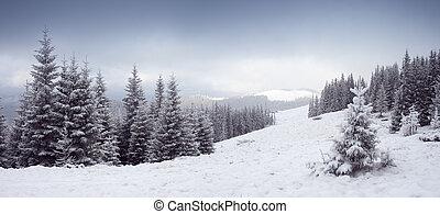 겨울의 나무