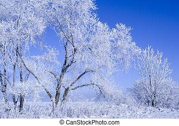 겨울의 풍경