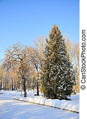 겨울, 공원, 에서, 눈