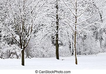 겨울, 공원, 조경술을 써서 녹화하다