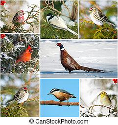 겨울, 새, collage.