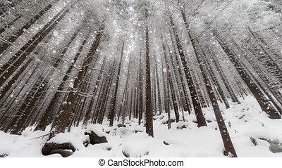 겨울, 크리스마스, 배경, 년, 새로운