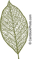견과, 배경, 고립된, 벡터, 잎, 백색