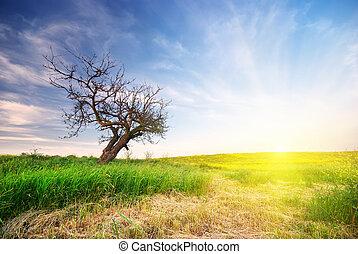 고독한, 나무