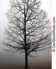 고독한 나무, 에서, 안개