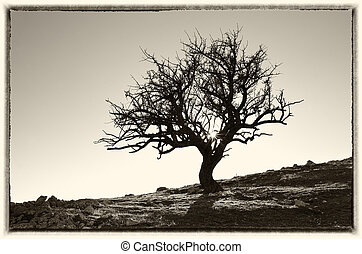 고독한, 나무, 에서, mountain.