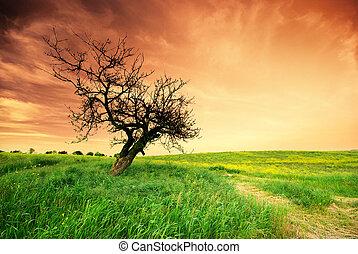 고독한, 나무, 통하고 있는, sundown.