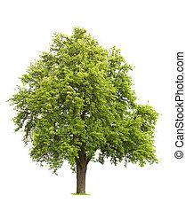 고립된, 나무