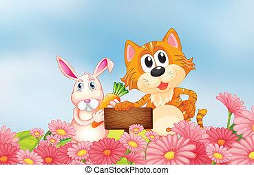 고양이, 보유, 빈 광주리, 당근, 간판, 토끼