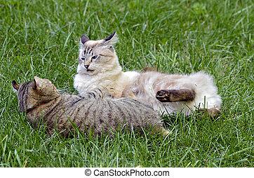 고양이, 풀, 싸움