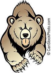 곰, 회색을 띤