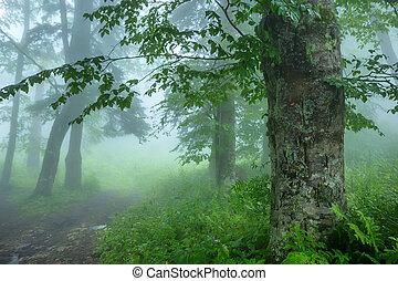 공상, 숲, 안개가 지욱한